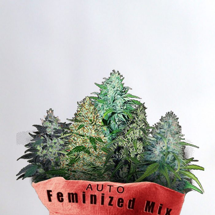 Auto Feminized Mix Marijuana Seeds