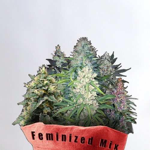 Feminized Mix Marijuana Seeds