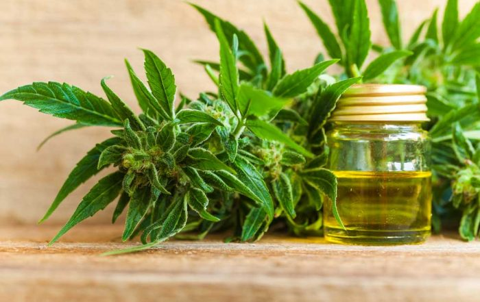 How Much CBD Oil from One Plant