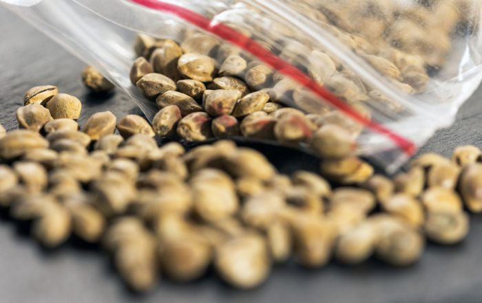 How to Store Cannabis Seeds Long Term